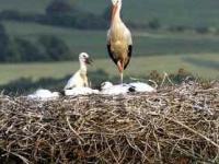 image Fickbeasts nacido para volar pájaros 1993
