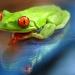 Científicos encuentran beneficios curativos en la piel de rana