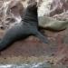 En riesgo 44 especies de mamíferos marinos en México