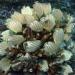 60% de los ecosistemas marinos sufren deterioro