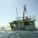 Barco destruye importante zona de coral en Yucatán