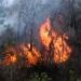 Se esperan incendios más intensos para este año