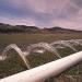 Exceso de siembra de maíz complica disposición de agua en Sinaloa