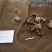 Hallan entierro múltiple en Cholula de hace 800 años