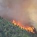 Controlan incendio en Sierra Gorda de Querétaro