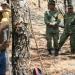 Inician reforestación de 8mil hectáreas afectadas por incendio en el bosque La Primavera