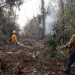 Incendios en Quintana Roo acaban con 921 hectáreas