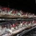 Inicia la recuperación de la producción de huevo en Jalisco