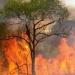 Baja California...incendios forestales