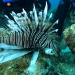 Ceviche...para salvar los Arrecifes
