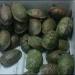 Profepa...inacción ante captura de tortuga amarilla