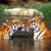 Vida íntima de los animales salvajes