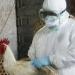 Influenza Aviar...vacunadas 789 mil aves...sacrificadas 480 mil