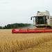 Calentamiento...contribuye al aumento de plagas en cosechas