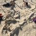 Cementerio de Ballenas...científicos explican su origen