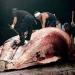 Japón...por fin acatará fallo dejará de cazar ballenas en el antártico