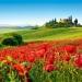 Toscana...región de cipreses, viñas, olivos, azafran y amapolas