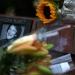 Robin Williams...sus cenizas esparcidad en la Bahia de San Francisco