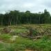 Liberia....recibirá US$150 millones por dejar de talar árboles