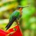 ONU...pidió acciones audaces para proteger biodiversidad