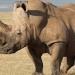 Sudáfrica...confiscan gran cargamento de cuernos de rinoceronte