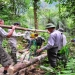 ONU...los bosques fundamentales para el desarrollo sostenible