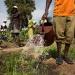 ONU...cooperativas tienen papel clave en futuro sostenible