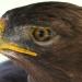 Águilas mexicanas... estarán presentes en el Desfile del Día Nacional de Francia