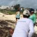 Quintana Roo... retiran sargazo de sus playas