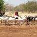 Somalia...el niño amenaza aumentar sequía y crisis alimentaria