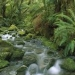 Greenpeace...selva de Campeche está siendo destruida