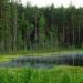 ONU...inversión en bosques clave para el desarrollo sustentable