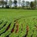 Jalisco...entregan a productores seguro contra riesgos