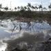 Quintana Roo...juez frena ecocidio en malecón de Tajamar en Cancún