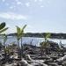 Profepa...no hay indicios de ecocidio en manglar de Tajamar