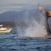 Glacier Bay...lugar preferido de las ballenas jorobadas