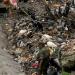 OMS...12.6 millones mueren por entornos poco saludables