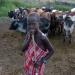 UNICEF...condenó el secuestro de más de 100 niños en Etiopía