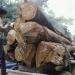 FAO y UE...acuerdan intensificar combate de tala ilegal