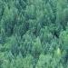 FAO...deforestación en AL producto de la agricultura comercial