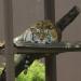 Profepa...inspecciona 95 zoológicos para verificar condiciones de vida