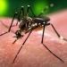 SSA...casos de Zika se incrementan a 2133 en la última semana