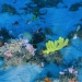 Científicos descubren nuevo arrecife de coral en el Océano Atlántico.