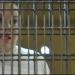 Elba Esther...declaran infundado el beneficio de la prisión domiciliaria