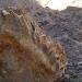 Durango..se descubrió el primer vestigio fósil de megafauna pleistocénica