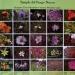Cerro de la Estrella..su riqueza florística abarca un total de 255 especies
