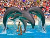 Golpe al turismo por parte del PRI, PVEM, NA y Encuentro Social