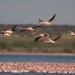 Aves migratoria especies se están reduciendo por pérdida de su hábitat