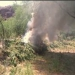 Sonora..destruido cultivo de 10 mil 865 metros de marihuana