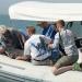 Vaquita marina...rescatan ejemplar en el golfo de California